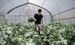科技巨擘纷投入AI农业应用借传感器与算法监控制植物成长要素