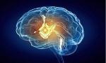 谷歌将替代大脑?大脑植入技术将改变人工智能