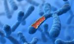 探寻五千年历史变迁,浪潮AI加速中国考古DNA研究