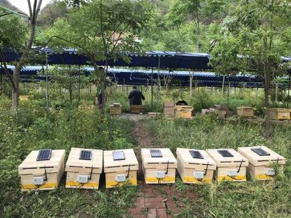 阿里发布丰收节助农黑科技:让蜜蜂用上语音识别和红外打卡