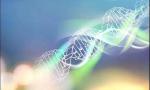 深兰科技成功开发基因序列对比AI算法 助力攻克新冠病毒