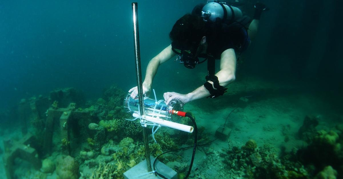 用人工智能保护环境,英特尔推能监测珊瑚礁健康状况AI项目