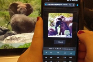 人工智能创造了世界上最好的大象追踪设备