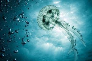 英国科学家发明机器水母,利用人工智能探索珊瑚礁和沉船