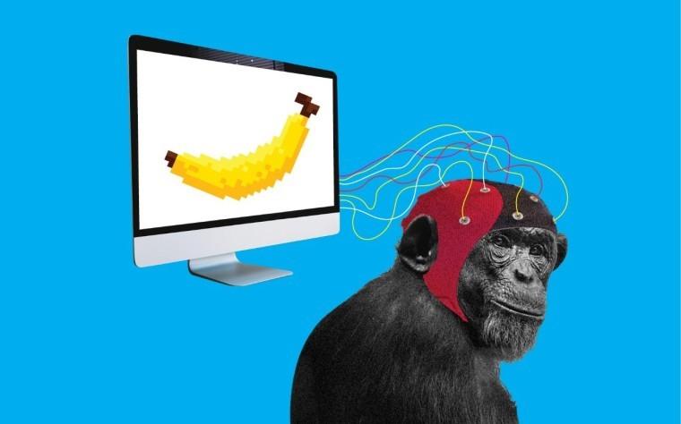 马斯克宣布将芯片成功植入猴子大脑,让它们可以玩电子游戏