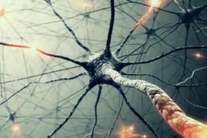 英国科学家将人类大脑的干细胞整合到芯片里头