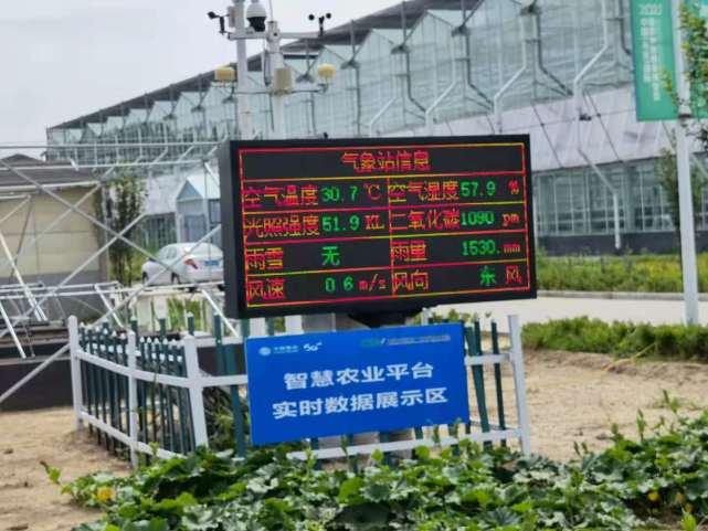 """移动云服务""""乡村振兴"""":山东寿光蔬菜产业迈入数字化时代"""